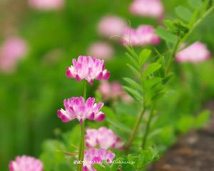Spring13_2